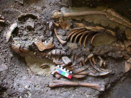 A skeleton dating from almost 10,000 years ago is seen in an undated picture courtesy of the University of Cambridge
