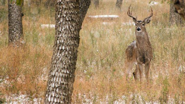 PHOTO: A deer in a woodland area. (STOCK PHOTO/Getty Images)