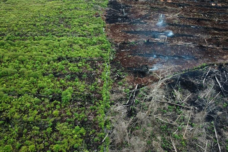 The WWF report urged citizens to do their bit by avoiding products linked to deforestation such as some meat, soy and palm oil products