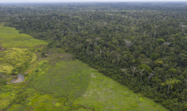 This Sept. 5, 2019 photo shows an aerial views of the lush Alto Rio Guama Indigenous Reserve saddled next to a deforested area owned by cattle ranchers, in Para state, Brazil. Satellite data from the Brazilian Space Agency has shown a sharp increase in deforestation and forest fires in the past year. (AP Photo/Rodrigo Abd)