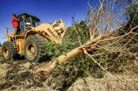 A bulldozer clears trees at the Um Raquba refugee camp in Sudan's eastern Gedaref province,