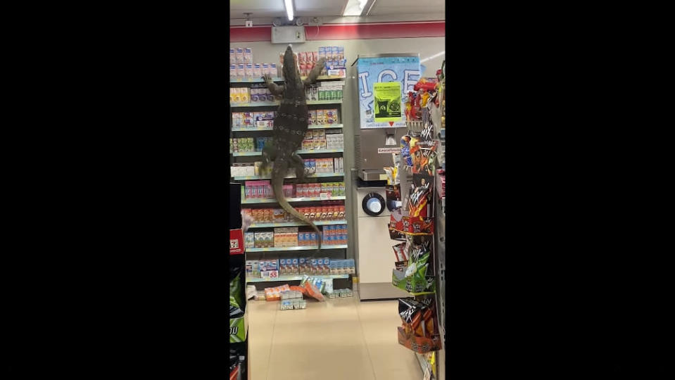 Grocery shopping: The Asian water monitor left customers terrified as it scaled a shelf full of milk cartons. — Screengrab from Facebook/Jejene Narumpa