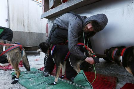 FILE PHOTO: Nicolas Petit checks his dogs before the ceremonial start of the 47th Iditarod Trail Sled Dog Race in Anchorage, Alaska, U.S. March 2, 2019. REUTERS/Kerry Tasker