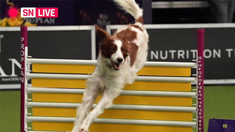 Westminster Dog Show 2019: Breed results, winners, Fox