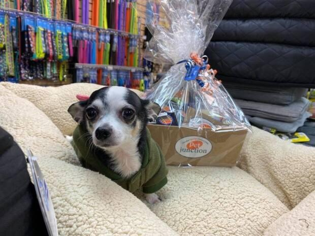 Rikki and his winner's gift basket. (Submitted by Velma Olsen - image credit)
