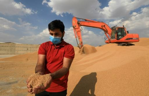 A third of Iraq's 40 million people rely on farming to live and farmers usually provide about five million tonnes of wheat products yearly