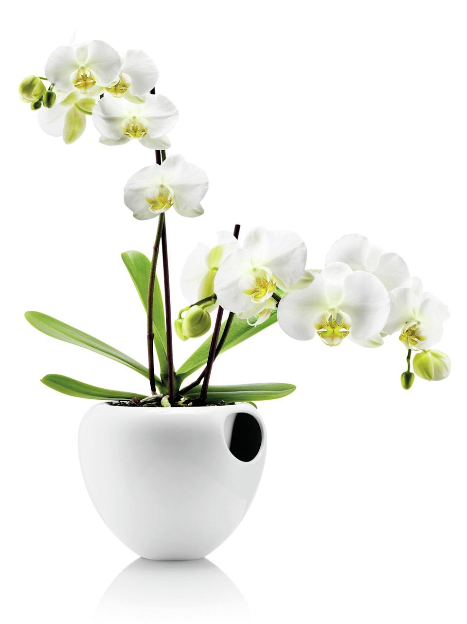 """<br><h2>Ivy Bronx Preusser Self-Watering Composite Pot Planter</h2><br><strong>Best For: Orchids</strong><br>So it's not the most functional pot ever made and not perfect for all plants, but we still recommend it for its sleek glassy exterior and luxe design. Pop an orchid inside for a nice bougie touch to your living space. <br><br><em>Shop</em> <strong><em><a href=""""https://www.wayfair.com/brand/bnd/ivy-bronx-b44318.html"""" rel=""""nofollow noopener"""" target=""""_blank"""" data-ylk=""""slk:Ivy Bronx"""" class=""""link rapid-noclick-resp"""">Ivy Bronx</a></em></strong><br><br><strong>Ivy Bronx</strong> Preusser Self-Watering Composite Pot Planter, $, available at <a href=""""https://go.skimresources.com/?id=30283X879131&url=https%3A%2F%2Fwww.wayfair.com%2Foutdoor%2Fpdp%2Fivy-bronx-preusser-self-watering-composite-pot-planter-w004479178.html"""" rel=""""nofollow noopener"""" target=""""_blank"""" data-ylk=""""slk:Wayfair"""" class=""""link rapid-noclick-resp"""">Wayfair</a>"""