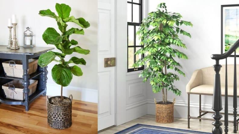Plant these lush green trees around your home for maximum spring vibes.