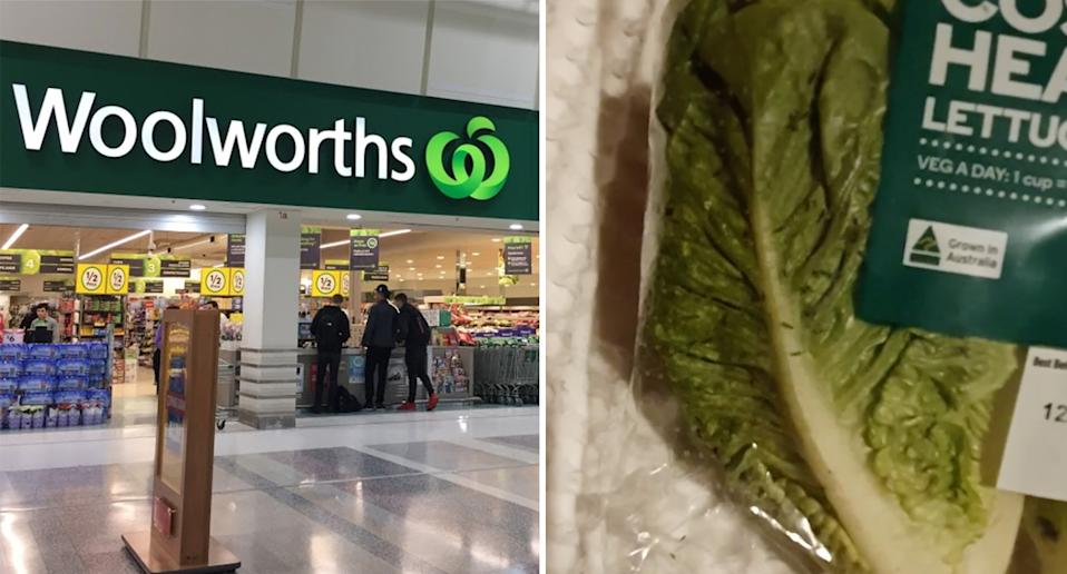 Woolworths store in South Australia and bag of cos lettuce with bugs inside.