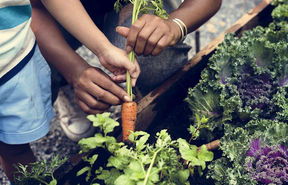 """<span class=""""caption"""">Food literacy includes understanding where food comes from and knowing how to plan, select, prepare and eat healthy meals. </span> <span class=""""attribution""""><span class=""""source"""">(Shutterstock)</span></span>"""