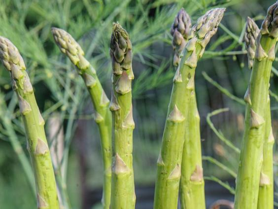 A larger garden space allows for bigger produce to grow such as asparagus, rhubarb and potatoes (Crocus)