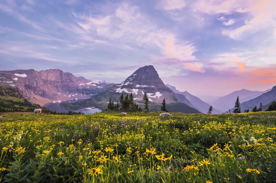 A mountain surrounded by wildflowers in Glacier National Park.
