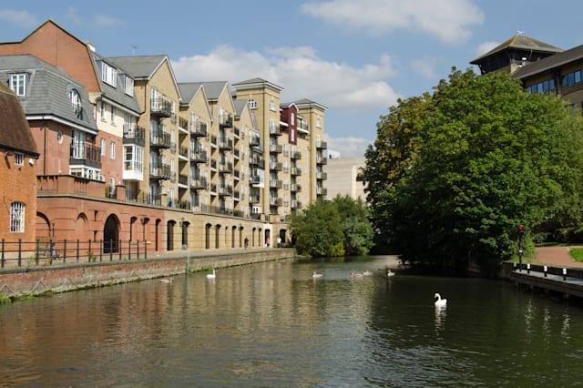 A large family of swans swimming on the waters of the Kennet and Avon Canal in the centre of Reading, Berkshire.  Modern apartme