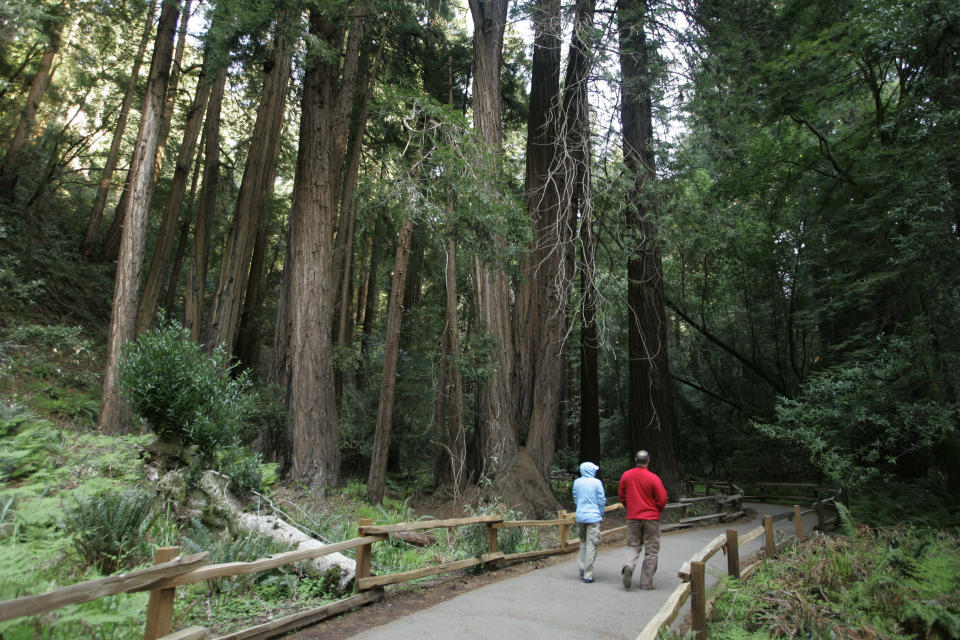 FILE - In this March 31, 2008, file photo, a couple walks along a pathway beneath giant redwoods at the Muir Woods National Monument, named after John Muir, in Marin County, Calif. The Sierra Club is reckoning with the racist views of founder John Muir, the naturalist who helped spawn environmentalism. The San Francisco-based environmental group said Wednesday, July 22, 2020, that Muir was part of the group's history perpetuating white supremacy. (AP Photo/Eric Risberg, File)