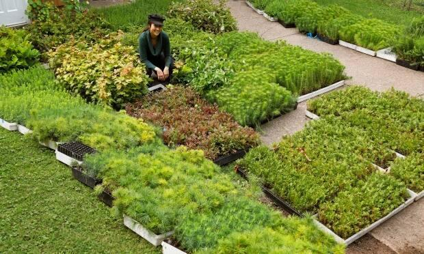 A Replant volunteer poses with 12,000 seedlings.