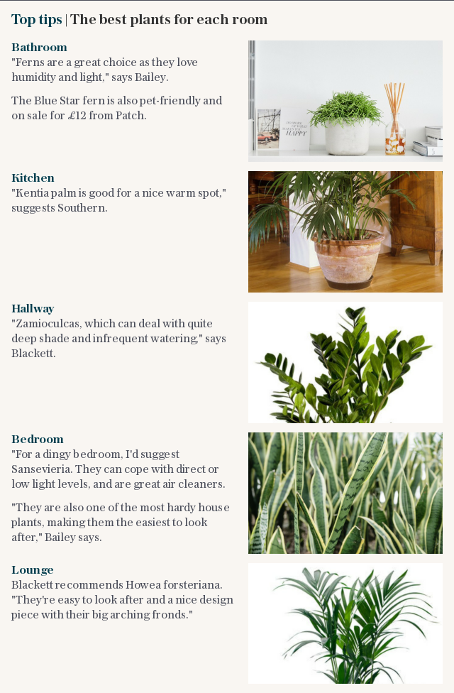 Top tips | The best plants for each room