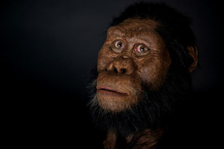 Facial reconstructions show a hominid with cheekbones projected forward, a prominent jaw, a flat nose and a narrow forehead (AFP Photo/HO)