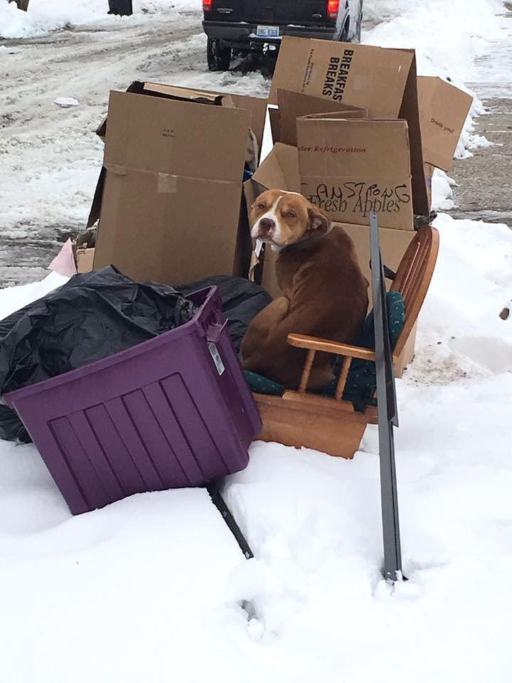 He Waited Dog Dumped On The Curb With Discarded Furniture On Snowy