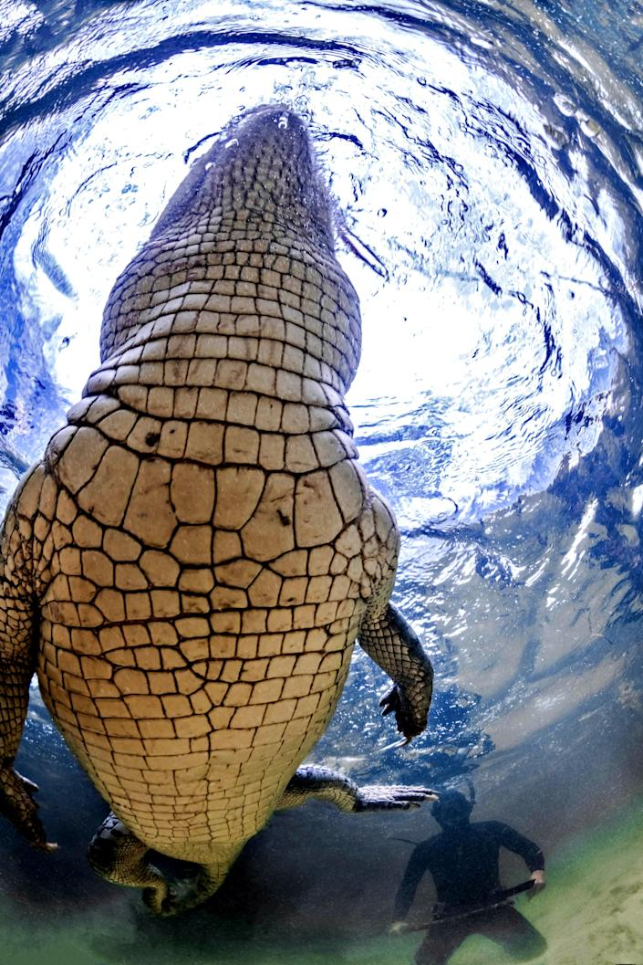 """<p>""""This was prefishing season before selected licensed fisherman are allowed to fish in the area, which is protected by the Mexican government, meaning the crocs were hungry and active. (Photo: Alex Suh/Caters News) </p>"""