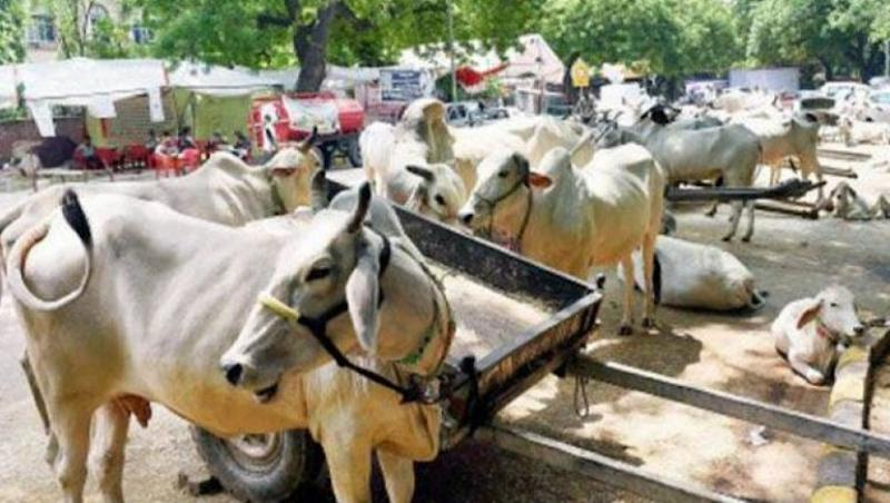 UP Government Suspends District Magistrate, 5 Others For Negligence in Cow Protection in State
