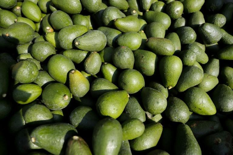 The future is pear-shaped: South Africa is one of a growing number of countries cashing in on the global craze for avocados
