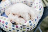 "When a pet becomes depressed, ""their… sleeping habits often change,"" <strong>John Ciribassi, DVM, </strong>former president of the American Veterinary Society of Animal Behavior, told WebMD. Both insomnia and excess sleep can be <a href=""https://bestlifeonline.com/sick-dog/?utm_source=yahoo-news&utm_medium=feed&utm_campaign=yahoo-feed"" rel=""nofollow noopener"" target=""_blank"" data-ylk=""slk:signs of a miserable dog"" class=""link rapid-noclick-resp"">signs of a miserable dog</a> or cat, so don't hesitate to make an appointment with the vet should your pet exhibit a shift in their sleeping patterns."