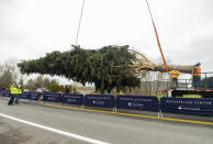 This year's Rockefeller Center Christmas tree, a 75-foot tall Norway Spruce, is guided onto a flatbed truck, Thursday, Nov. 12, 2020, in Oneonta, N.Y. The tree will be brought into New York City and erected at Rockefeller Center on Saturday, Nov. 14. (Diane Bondareff/AP Images for Tishman Speyer)
