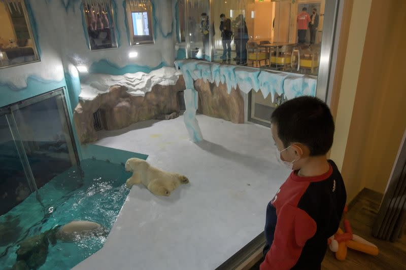 Visitors look at polar bears at an enclosure inside a hotel at a newly-opened polarland-themed park in Harbin