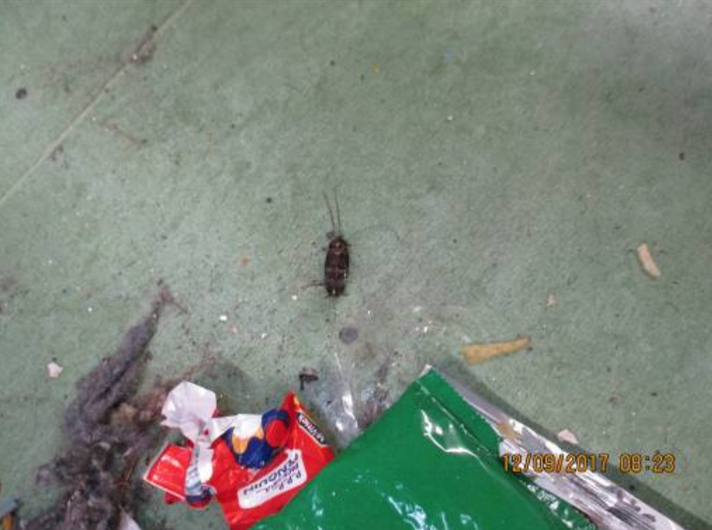<p>A cockroach and litter on landing. (Life in prison: Living conditions report) </p>