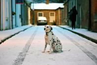 <p>Otta the Dalmation dog sits in the fallen snow in Dublin.The Met Office is warning between 5cm and 10cm of snow could fall in places, with up to 15cm in areas where showers are most frequent. (Reuters/Clodagh Kilcoyne) </p>