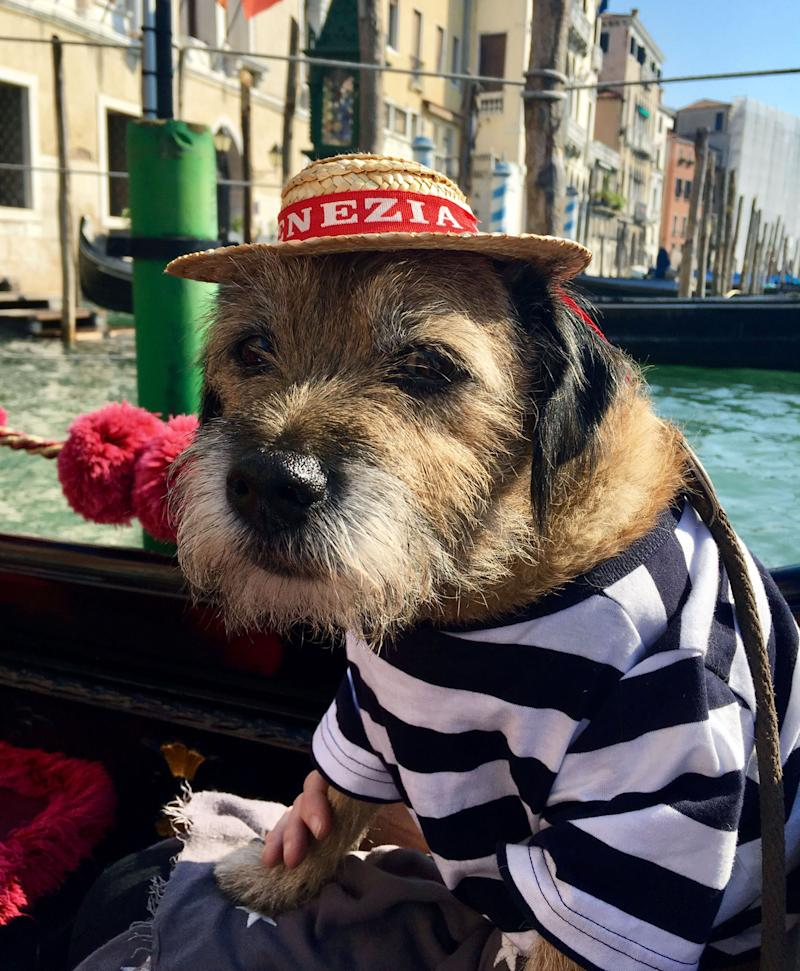 Pete the border terrier on the canals of Venice, Italy. (Photo: Caters News)