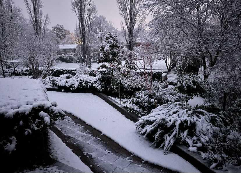 Snow blanketed a backyard in Orange in NSW's Central West. Source: Yahoo News Australia/supplied