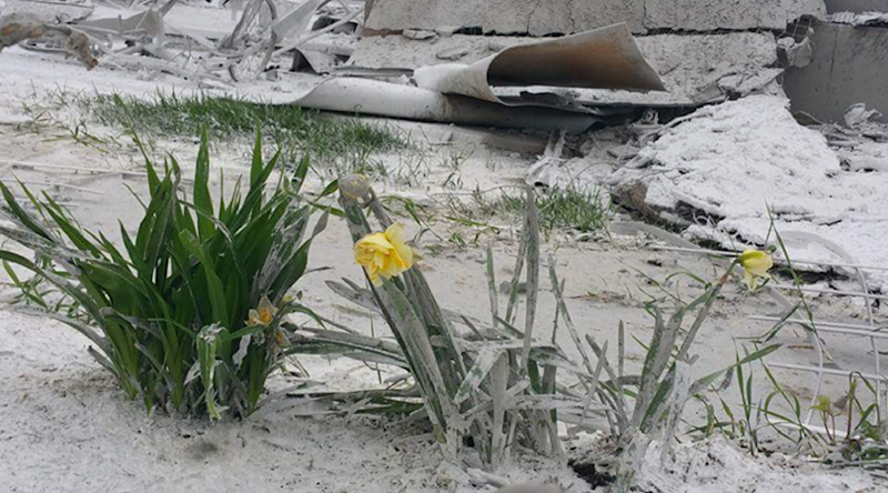 Flowers growing on the Pendergasts' property after the fire.