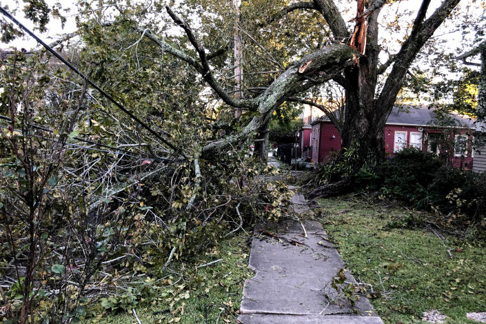 A large tree limb, which snapped as Hurricane Zeta moved through New Orleans, rests on power lines in the city's Carrollton neighborhood on Thursday, Oct. 29, 2020. (AP Photo/Kevin McGill)