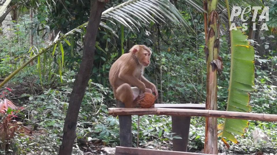 According to PETA's investigation, monkeys were allegedly used and exploited. Source: PETA