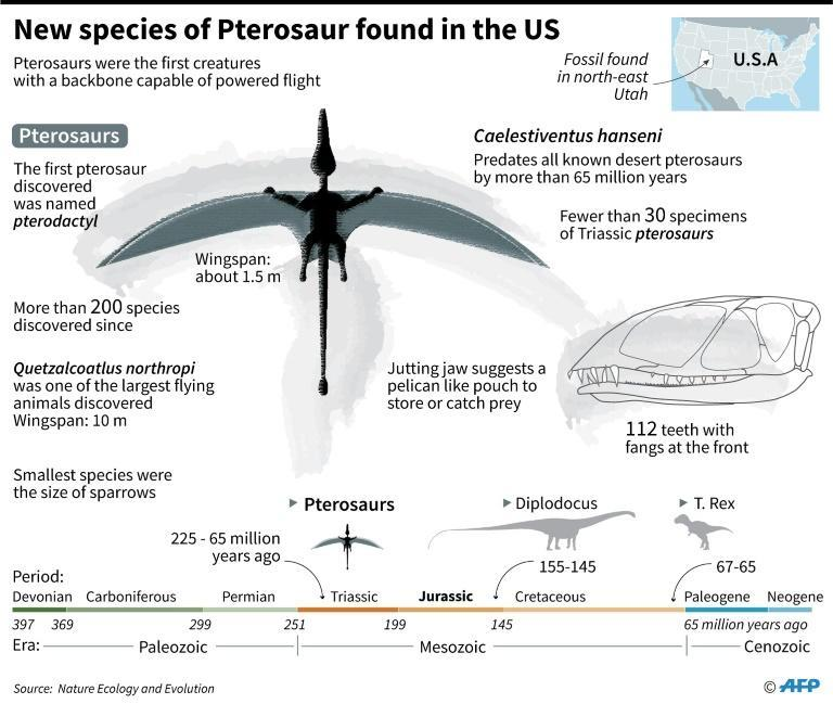 Factfile on Caelestiventus hanseni a new species of flying reptiles, known as Pterosaurs, discovered in US state of Utah