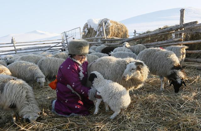 <p>Tanzurun Darisyu, head of a private Tuvan farm located in the Kara-Charyaa area south of Kyzyl town, the administrative center of the Republic of Tuva (Tyva region), holds a lamb in southern Siberia, Russia, on Feb. 14, 2018. (Photo: Ilya Naymushin/Reuters) </p>