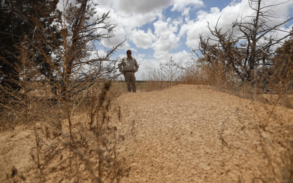 """Jude Smith, a biologist at the Muleshoe National Wildlife Refuge outside Muleshoe, Texas, looks at a big mound of sand on his property on Tuesday, May 18, 2021. A dust storm deposited the sand over a two-day period this spring. The U.S. Department of Agriculture is encouraging farmers in a """"Dust Bowl zone"""" that includes parts of Texas, New Mexico, Oklahoma, Kansas and Colorado to preserve and establish grasslands to help hold soil in place. (AP Photo/Mark Rogers)"""