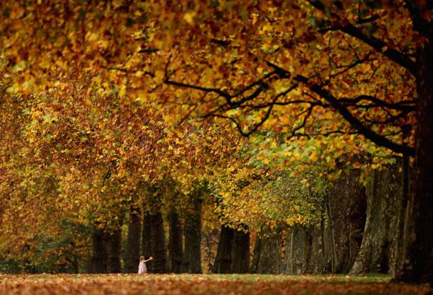 The colours of autumn leaves are among the many pleasures of the coming season: getty images