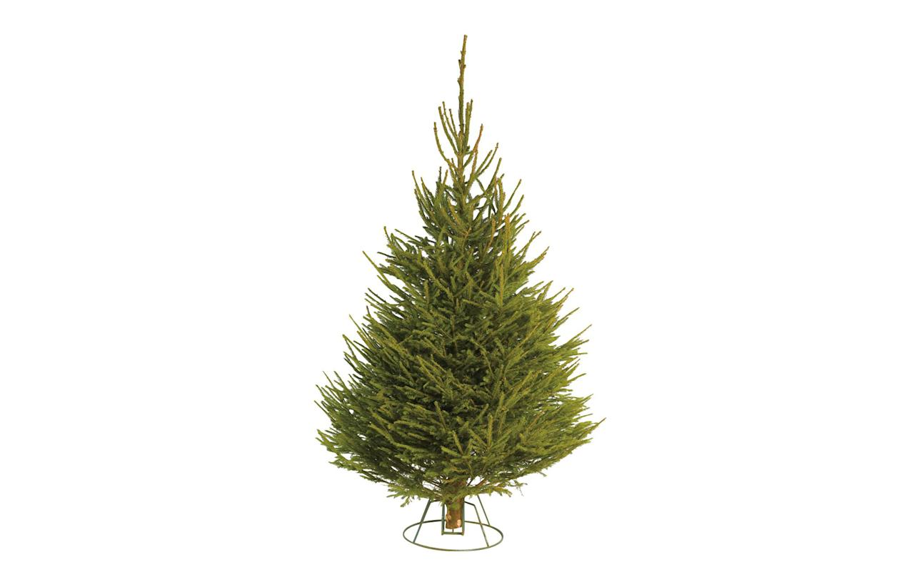 "<p><a rel=""nofollow"" href=""https://www.homebase.co.uk/cut-norway-spruce-real-christmas-tree-5-6ft_p585061""><em>Homebase, £11</em></a> </p>"