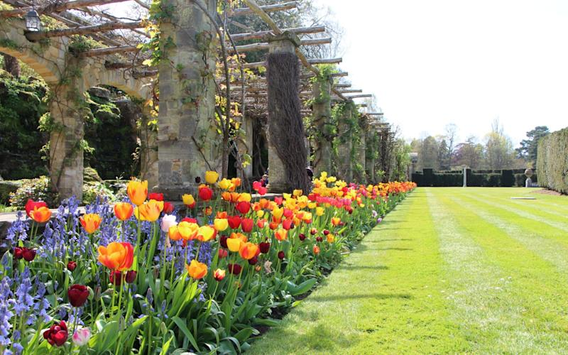 Spring flowers and tulips at Hever Castle - Hever Castle