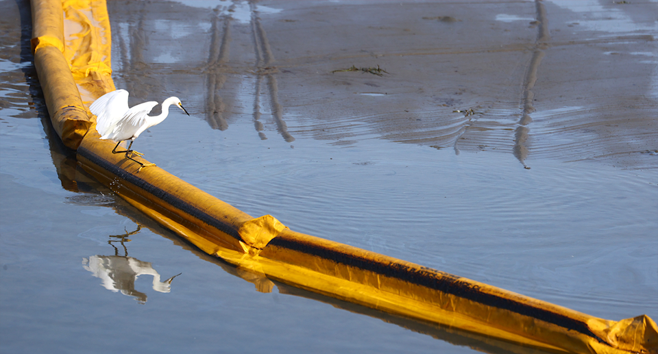 A heron stands on a temporary barrier at Talbert Marsh.
