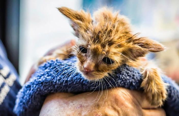A kitten was rescued by firefighters who found the feline in the middle of the road on Sept. 20 and rushed her to a nearby shelter. The kitten has been given the moniker of, 'Baby Yoda' kitten.