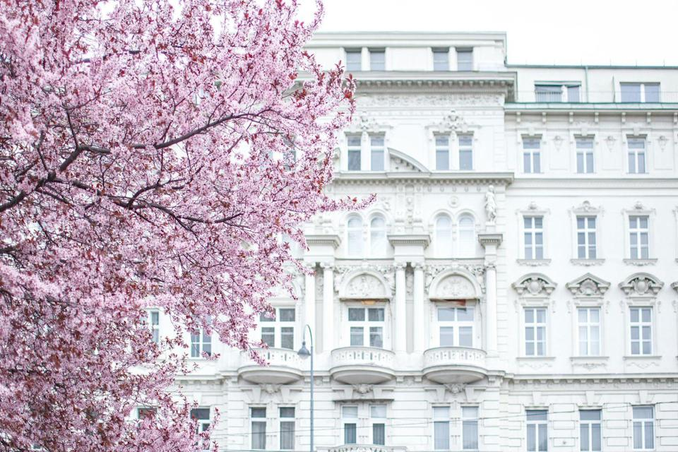 """<p><a class=""""link rapid-noclick-resp"""" href=""""https://www.goodhousekeepingholidays.com/tours/danube-cruise-ruth-eamonn"""" rel=""""nofollow noopener"""" target=""""_blank"""" data-ylk=""""slk:VISIT VIENNA IN SPRING 2022"""">VISIT VIENNA IN SPRING 2022</a></p>"""