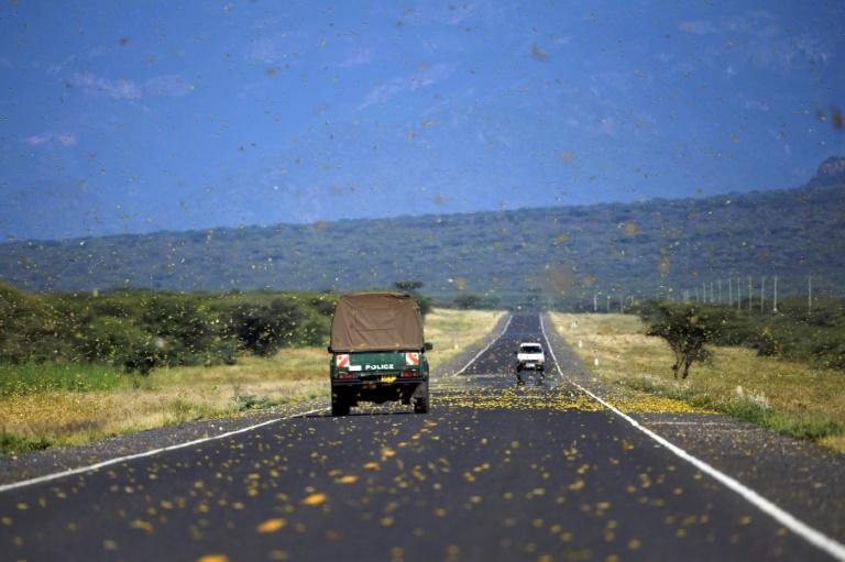 Locusts swarms, seen here in Kenya, have triggered UN concern