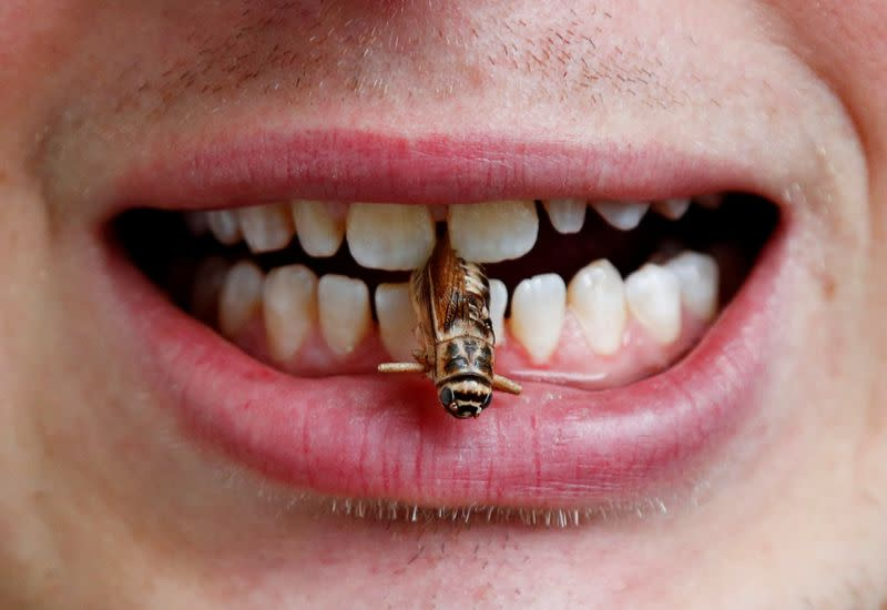 Dr. Schouteten poses with a cricket between his teeth at Ghent University