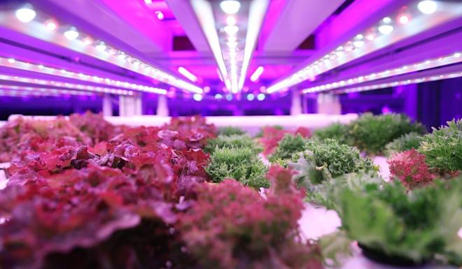 Farm66 uses home-grown technology created by Inovo Robotics at its vertical farms. Photo: K. Y. Cheng