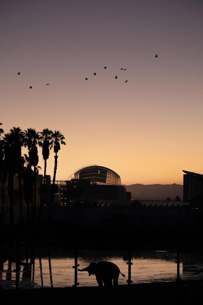 The Academy Museum of Motion Pictures, as seen at sunset from the neighboring La Brea tar pits