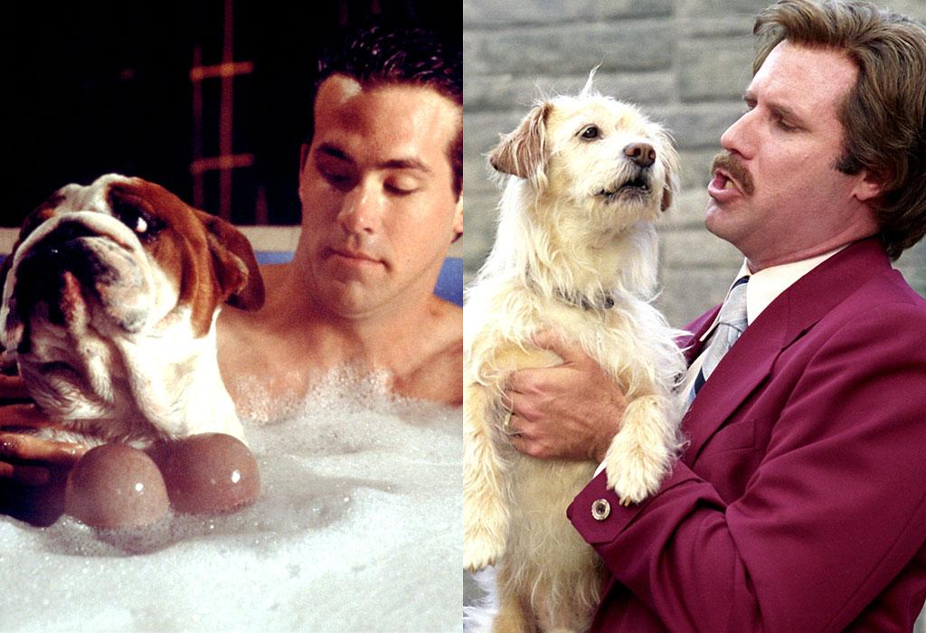Van Wilder Anchorman