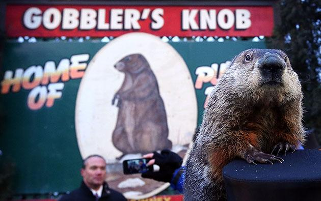 Wanted: Punxsutawney Phil (Alex Wong/Getty Images)